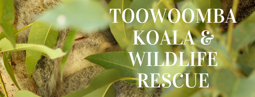 Toowoomba Koala and Wildlife Rescue
